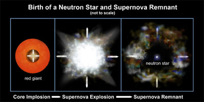 Birth of a Neutron Star and Supernova Remnant